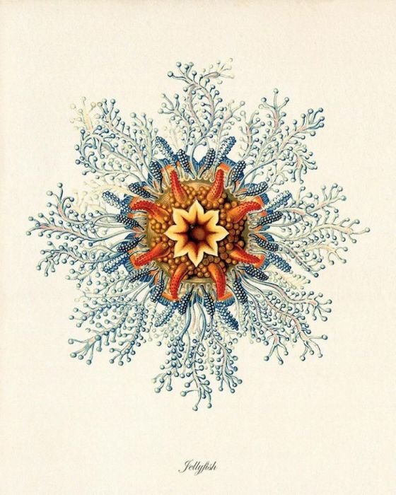 Plakat koralowce  grafika muszle  prezent -