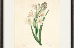 Kwiaty wydruk grafika wydruk vintage kwiaty