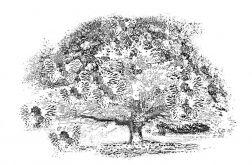 Obraz na płótnie Drzewo marzeń, 120 x 80