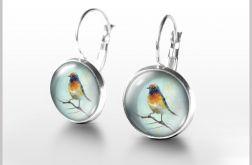 Kolczyki - Kolorowy ptak - bigle angielskie