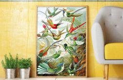 Plakat rajskie ptaki 50X70 CM B2