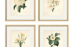 Grafika wydruk Kwiaty plakat wydruk vintage