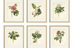 Kwiaty wydruk grafika wydruk vintage 6 x A4