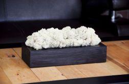 Chrobotek reniferowy w czarnej donicy - White