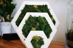 Biały heksagon z mchem rozmiar s
