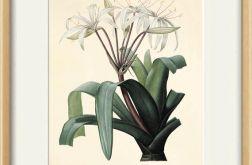 Kwiaty kwiat wydruk grafika reprint vintage