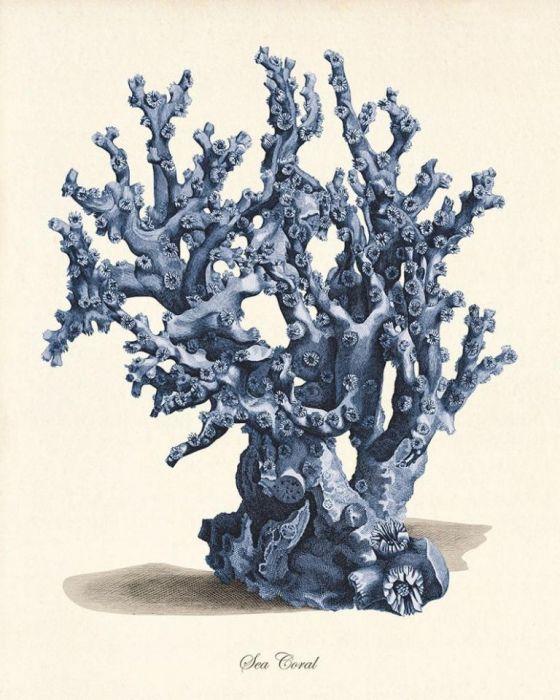 Plakat grafika koralowce muszle  prezent - null