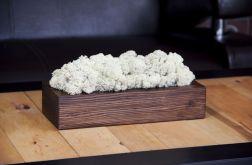 Chrobotek reniferowy, orzechowa donica -White