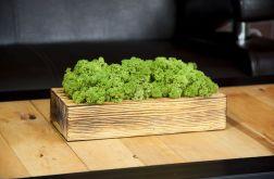 Mech chrobotek w szczotkowanej donicy - Green