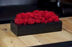Chrobotek reniferowy w czarnej donicy - Red