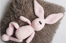 królik Kajtek