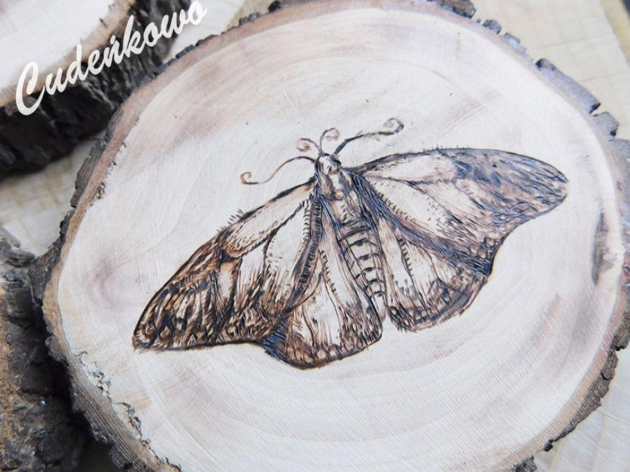 Motyl II - 4