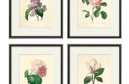 Grafika Zioła Kwiaty wydruk wydruk vintage