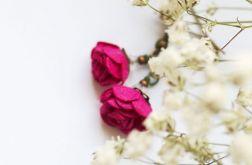 Letnie kwiaty - Dzika Róża