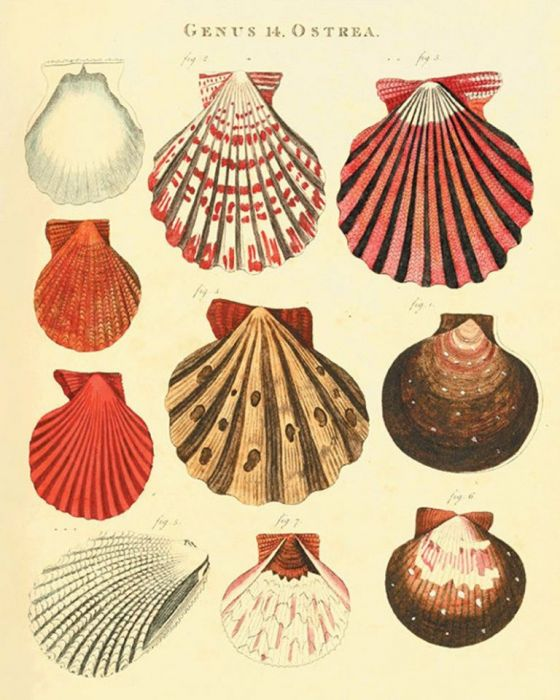 Plakat grafika muszle koralowce   prezent -