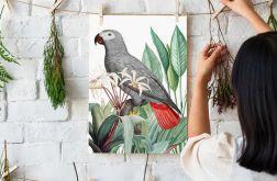 Plakat Papuga Szara 50X70 B2