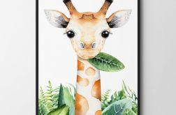 Plakat, obrazek żyrafa 50X70 B2
