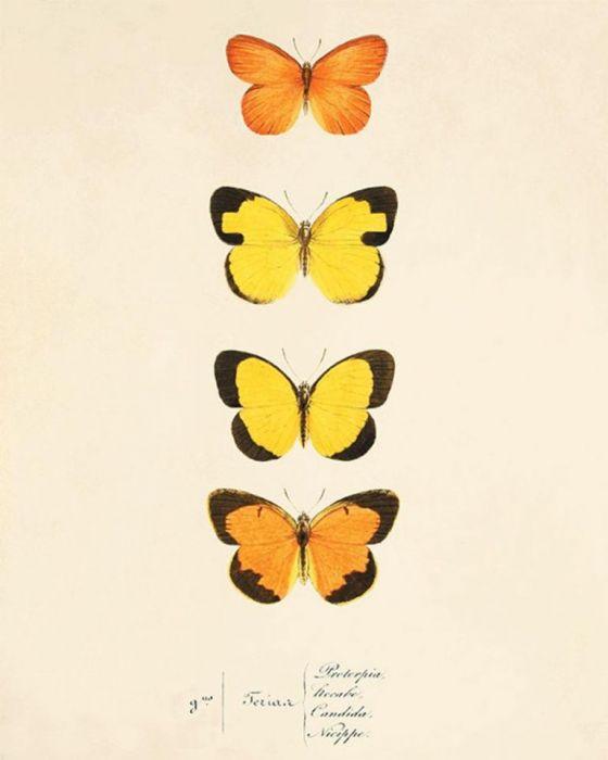 Grafika motyle motyl prezent historia natura -