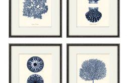 Plakat grafika koralowce muszle prezent