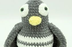 Pingwinek szary
