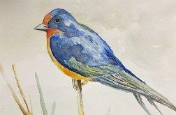 Niebieski ptaszek