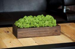 Chrobotek reniferowy, orzechowa donica -Green