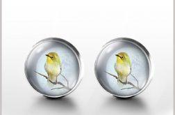 Śpiewający ptaszek - kolczyki wkrętki