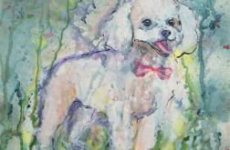 Pies pudel z serii Psy i koty