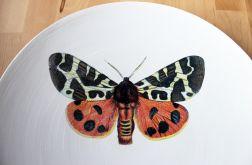 Patera Motyl, Motyle - na owoce, cistka i inne.