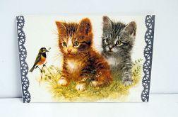 Koty na obrazku