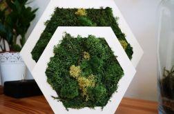 Biały heksagon z mchem rozmiar M