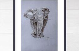 Słoń z serii Nasi bracia
