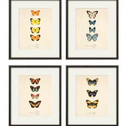 Grafika motyle motyl prezent historia natura