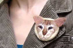 Kot kolorpoint krótkowłosy