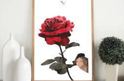 """Plakat """"Róża"""""""