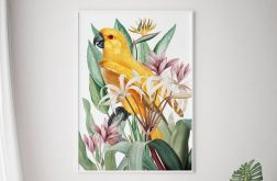 Plakat papuga rośliny 50X70 B2