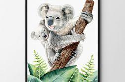 Plakat, obrazek koala 50X70 B2
