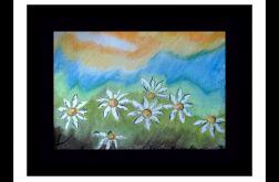 łąka pastele