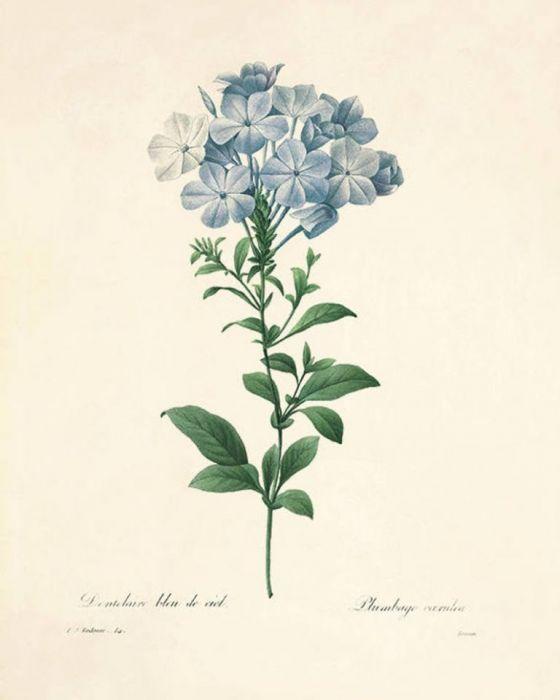 Kwiaty  wydruk grafika wydruk vintage zestaw -