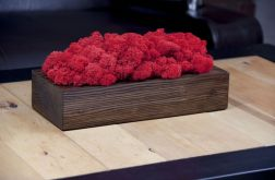 Chrobotek reniferowy, orzechowa donica Red