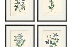 Wydruk Kwiaty grafika wydruk vintage