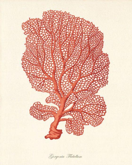Plakat grafika koralowiec czerwony prezent - null
