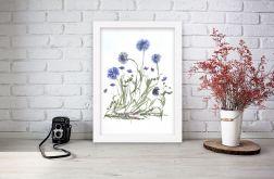 Obrazek A4 Prawdziwe suszone kwiaty 008