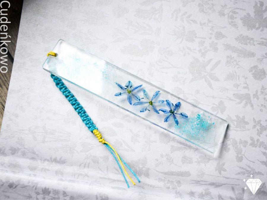 Zatopek błękitny kwiat cebulicy
