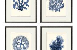 Plakat muszle grafika koralowce prezent
