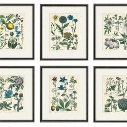 Kwiaty zioła wydruk grafika wydruk vintage