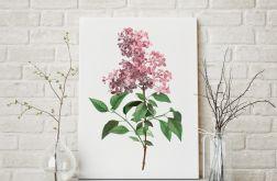 Plakat kwiat bzu 50X70 B2