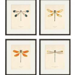 Grafika ważka motyle prezent historia natura