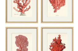 Plakat grafika koralowiec czerwony prezent