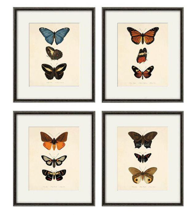 Grafika motyl motyle prezent historia natura
